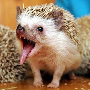 Hedgehog%20Trouble%20300px.jpg